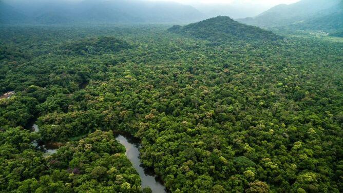 Raport: część Puszczy Amazońskiej upadnie za kilkadziesiąt lat