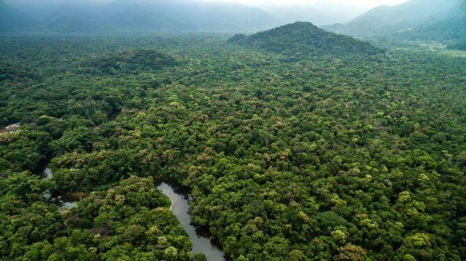 Straciliśmy lub zdegradowaliśmy prawie dwie trzecie pierwotnych lasów tropikalnych