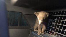 Uratowane niedźwiadki (Arizona Department of Public Safety)
