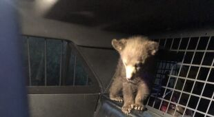 Uratowane niedźwiedzie