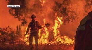 Pożary Kalifornii w 2020 roku (Shutterstock)